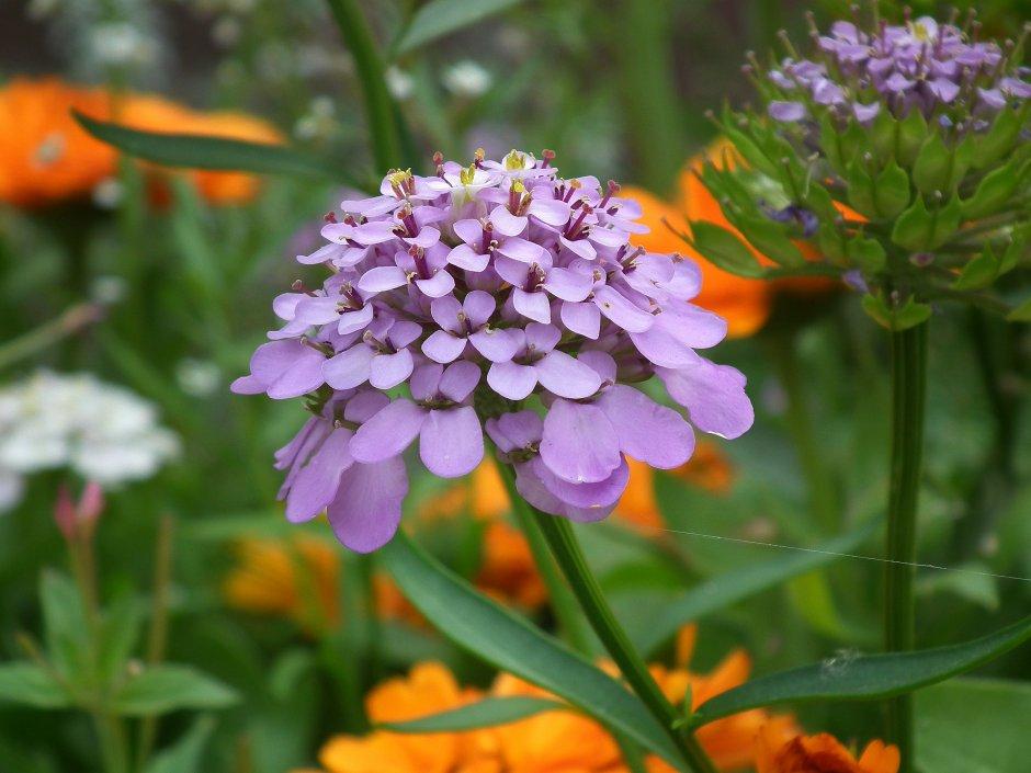 M 39 n wilde bloementuin zeeland op foto for Www bloem en tuin nl