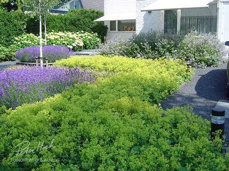 Lavendel combineren met vrouwenmantel